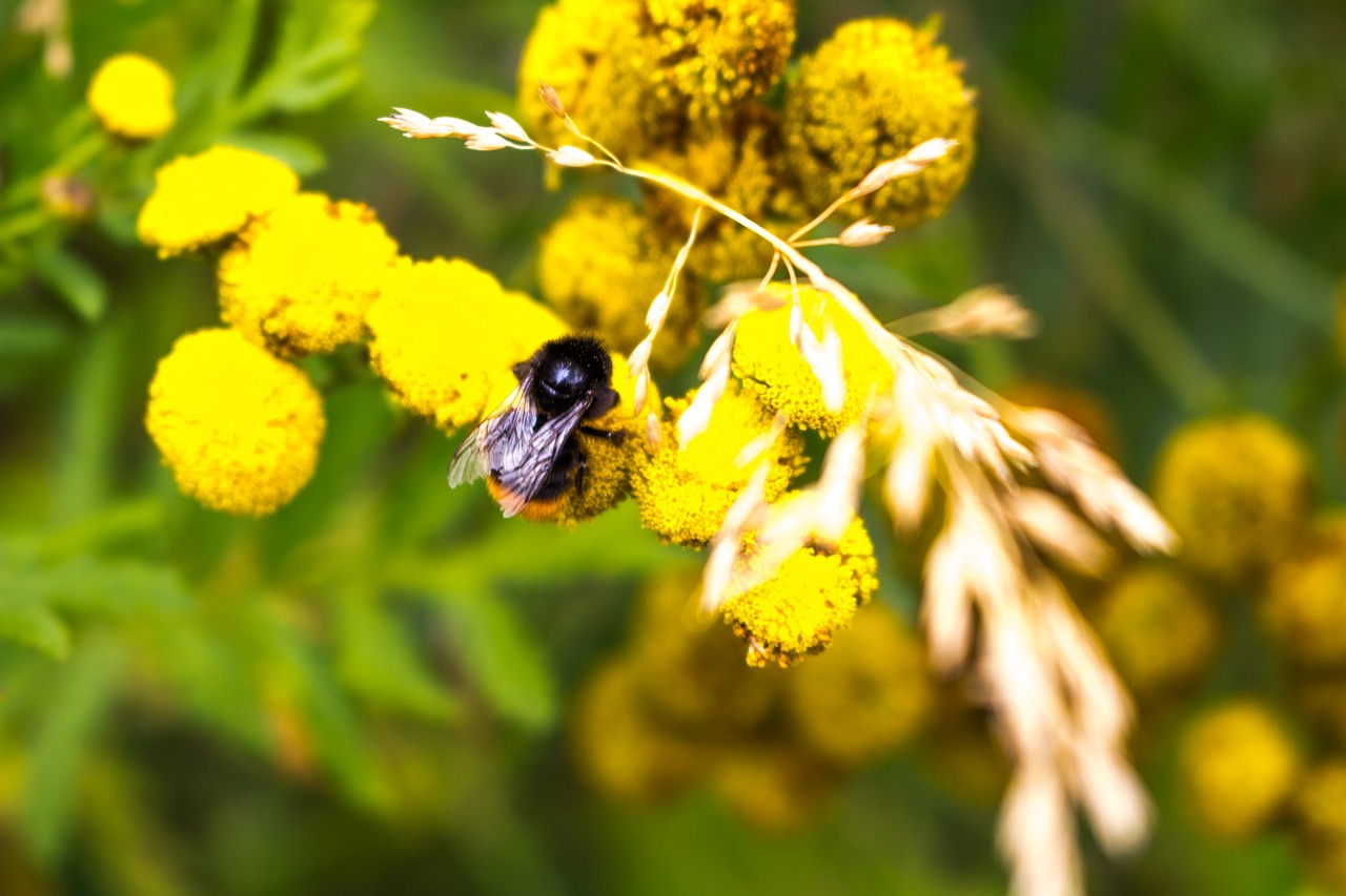 Small Bee