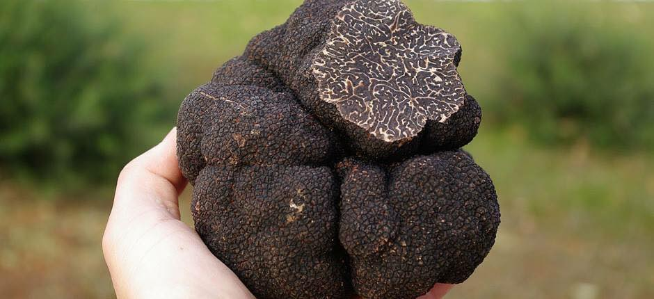 Art of Growing Truffles
