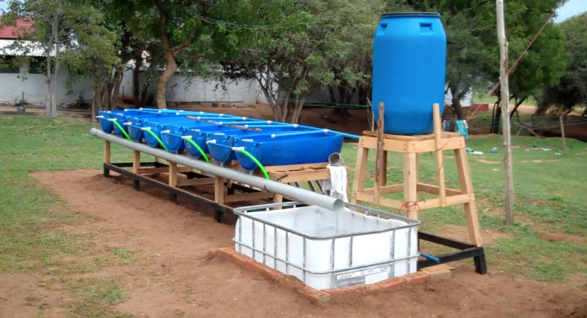 Kerala Aquaponic barrel-growbed