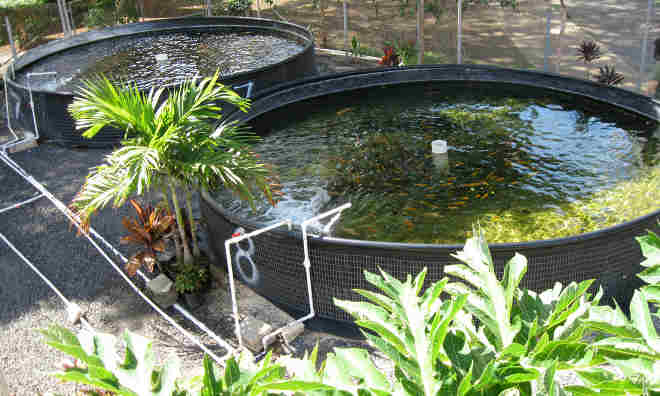 Aquaculture or Aquaponics
