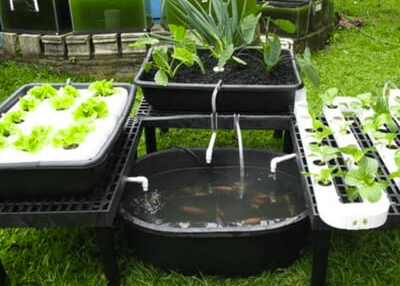 Aquaponics Grow Bed_Fish_Profit