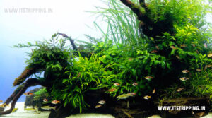Aquarium Fish Hiding Places